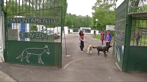 Albergue de animales de Oviedo
