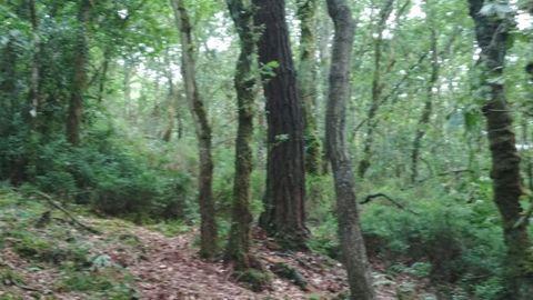 En terreno de la SAT Monte de Candedo hay diversa masa arbolada