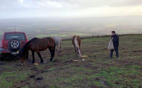 Xabier Paz dándole de comer a sus animales, en Vilapedre (Vilalba)