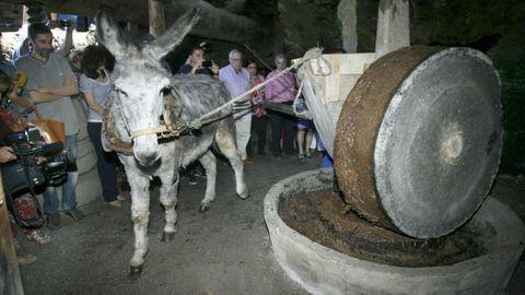 La exhibición de molienda de aceitunas al estilo tradicional es uno de los atractivos de la Mostra do Aceite de Quiroga