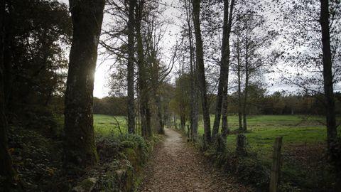 Tramo del Camino Primitivo entre Castroverde y Lugo