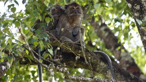 Macacos en el zoo de Marcelle