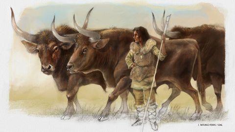 Recreación de Elba y los tres uros encontrados con ella en la sima de Chan do Lindeiro