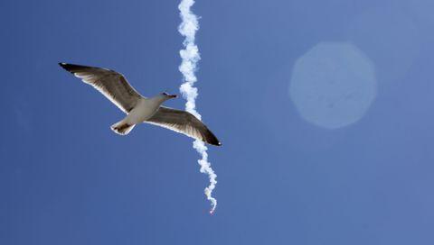 Unha gaivota pasa diante dunha bengala que tirou un mariñeiro durante as protestas nos peiraos galegos en contra da nova normativa europea de control. Cambados. 14/05/2021