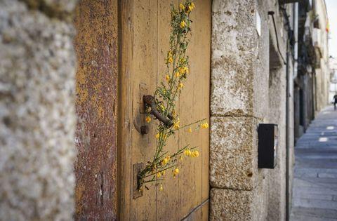 Casco vello de Ribadavia: ramallete de xestas que se coloca nas portas o 30 de abril pola noite para recibir o mes de maio e protexer así as vivendas do mal de ollo, meigallos e trasnos. 01/05/2021