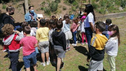 Plantación de un carballo en el colegio de Chancelas, en Combarro