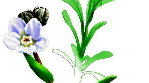 Flor Embiguiña. Ilustración de Suso Cubeiro