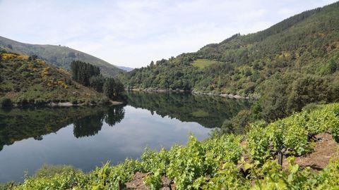 Zona de viñedos en el municipio de Negueira de Muñiz
