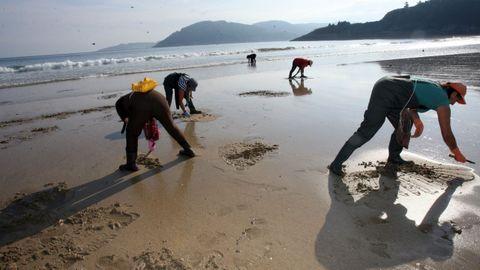 Mariscadoras de O Vicedo, en imagen de archivo en la playa de Abrela, extrajeron durante años coquina