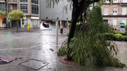Arboles caídos en Ourense