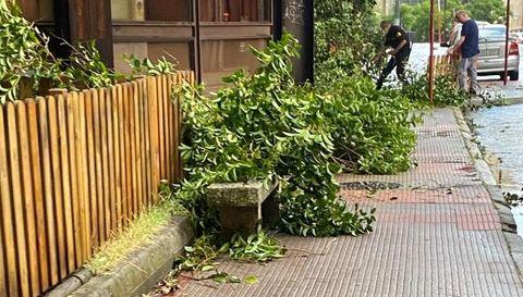 Árboles caídos en Ourense