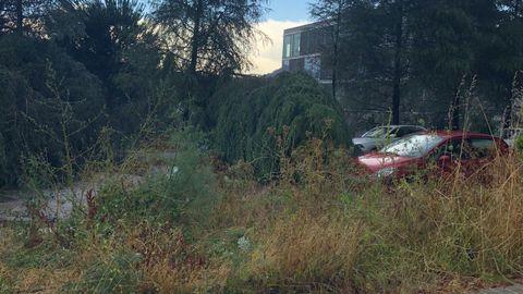 Temporal en Ourense.Árboles caídos en As Lagoas