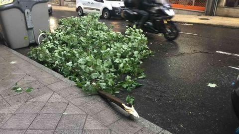 Temporal en Ourense.El temporal arrancó decenas de árboles de cuajo