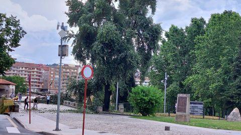 Un árbol cayó sobre el puente romano por el efecto de la tormenta