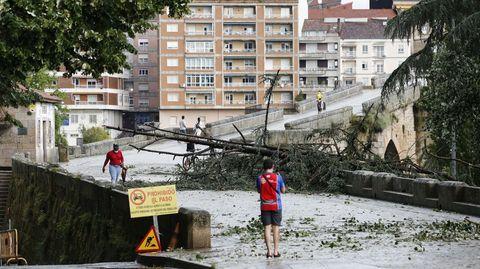 Un árbol corta el paso al Puente Romano
