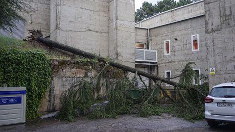 El viento derribó árboles en casi todas las calles