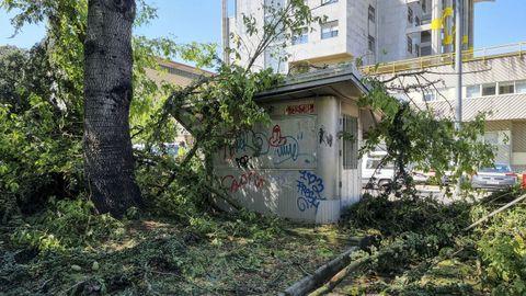 Restos de la arboleda que cayó en las inmediaciones de la comisaría de la Policía Nacional