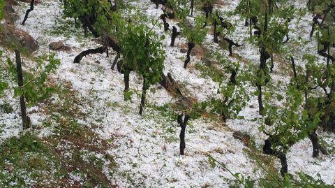 El granizo cubrió de blanco el suelo entre las viñas de San Fiz