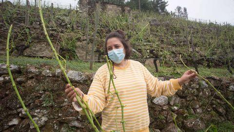 Una de las propietaria de Adega Amedo, bodega incluida en la D.O. Ribeira Sacra, Lorena Amedo, muestra los sarmientos rotos y las cepas destrozadas en la viña