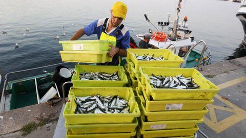 Un pesquero descargando sardina en víspera de san Juan del año pasado en Cambados