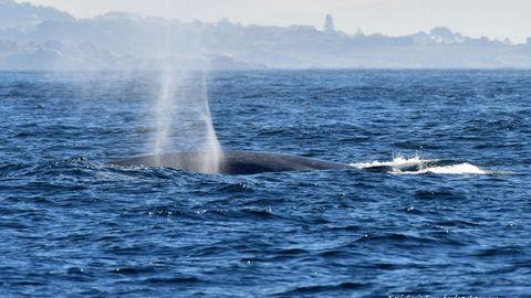 Avistamiento de una ballena azul en la costa gallega en 2018.