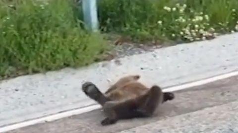 El oso hallado en el puerto de Leitariegos