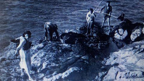 Recolleita de algas para abono. A Guarda (Pontevedra, 1951). Foto: Francisco Ponti.