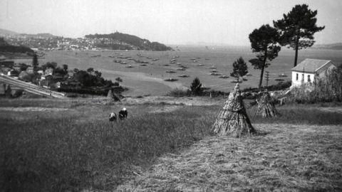 Sega de prado. Chapela (Pontevedra, 1966).