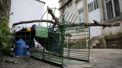 Jaulas utilizadas por el Concello de Lugo para capturar palomas