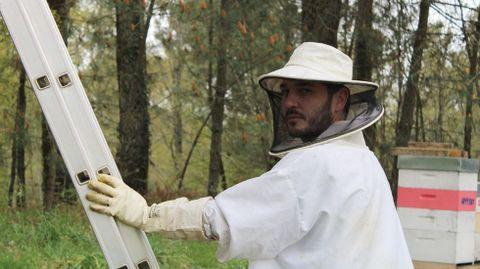El apicultor Rubén González Novoa, recogiendo un enjambre en Sarandón (Vedra).