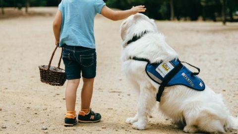Perro de asistencia para personas con autismo