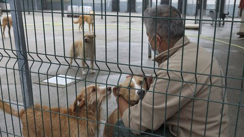 Animales en la protectora de animales Os Palleiros