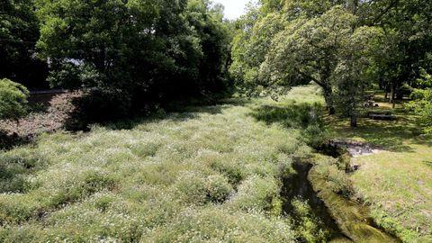 Imagen del río, con caudal bajo cerca de la carballeira, el año pasado