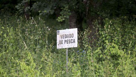Los múltiples letreros informativos ubicados a ambos lados del paseo se encuentran tapados por la flora, que en ocasiones impide leer parte de su contenido.