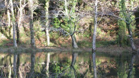 As Fragas do Eume, o bosque atlántico mellor conservado de Europa enteira.