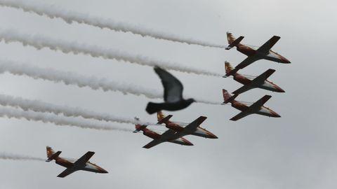 Una paloma se cruza en el vuelo de los aviones de la patrulla Águila