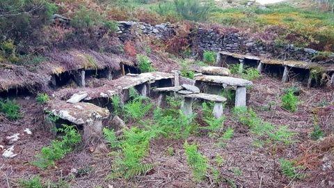 Abellarizas en Cova do Raposo, Ogas, Vimianzo