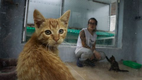 En la protectora Progape están preocupados por la falta de espacio para los gatos