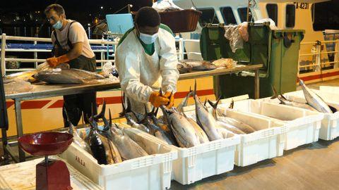 Imagen de archivo de una de las últimas descargas de bonito de esta costera en Burela, líder gallego en la venta de ese pescado azul de temporada
