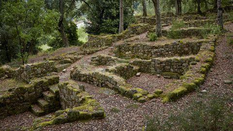 Uno de los elementos más importantes del castro de Santomé es su vegetación