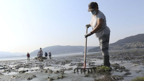 Las mariscadoras prepararon la playa retirando las algas antes de sembrar