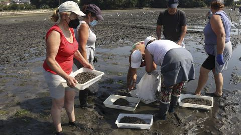 Las mariscadoras se reparten un millón de unidades de almeja para la siembra