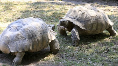 Tortugas en Marcelle