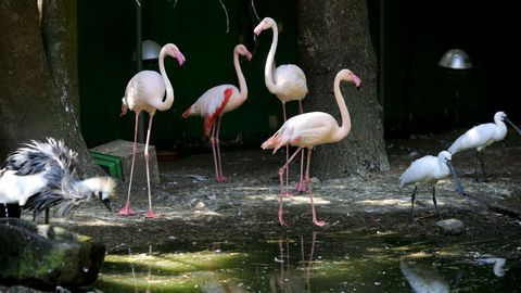 Los flamencos son unas de las aves más vistosas de Avifauna