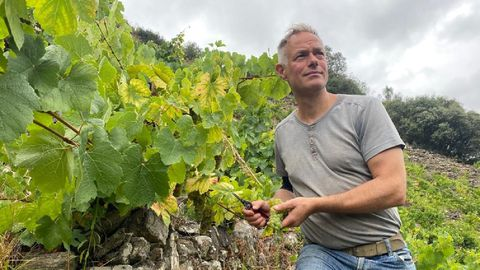 El bodeguero Martin Damm inició ayer la vendimia en sus viñas de godello de la subzona de Amandi, en el municipio de Sober