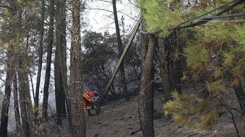 Reparación de una línea eléctrica dañada por el incendio en el municipio de Quiroga, en una imagen tomada ayer