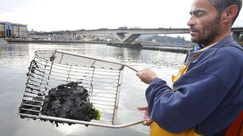 El patrón mayor de Pontevedra enseña el lodo que cubre gran parte del canal del río Lérez