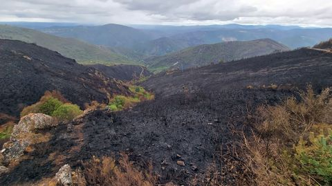 Terrenos afectados por el último incendio entre Ribas de Sil y Quiroga