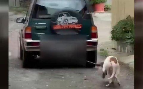 Denuncian a un cazador que arrastraba a su perro tras el coche