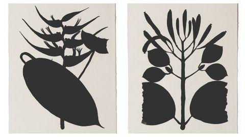 Dos de las piezas de la serie de 42 «Leyenda negra», para la que Pilar Millán se inspiró en los dibujos botánicos de Mutis.